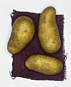 Kartoffeln der Sorte: Cilena