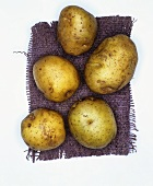 Potatoes, variety: Ackersegen