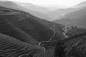 The landscape near Pinhao in Douro, Portugal