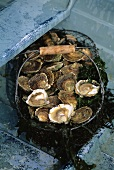 A basket of fresh oysters