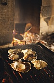 Scallops on a fogolar in a pub (Istrien, Coatia)