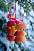 Apfelscheiben auf roter Schnur am Tannenbaum