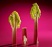 Miniature figures painting rhubarb stalks