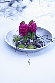 A plate decorated for Chirstmas with hyacinths