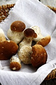 Fresh porcini mushrooms on a linen cloth in a basket