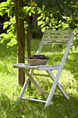 Fresh damsons in a bowl on a garden chair