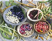 An arrangement of various beans