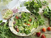 Water cress, garden cress, winter cress and land cress