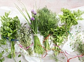 Various bunches of herbs