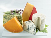 Various types of cheese: Roquefort, goats' cheese, red Cheddar, Mimolette, sage cheese