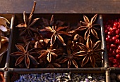 Star anise in a seedling tray