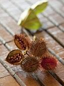 Achiote seed pods (bixa orellana) from Brasil