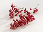 Bunches of pink peppercorns