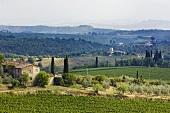 Landscape: podere, monti, Castelnuovo Berardenga, Tuscany, Italy