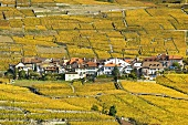 The wine village of Epesses amongst golden vineyards, Switzerland