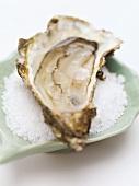 Half of a fresh oyster on coarse salt