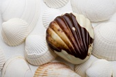 Sea shells with Belgian chocolate sea shells