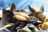 Cozze al vino bianco (Mussels in white wine, Italy)