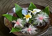 Blüten vom Pagodenbaum im Wasser schwimmend