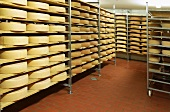 Bergkäse cheese (Alpine cheese) in ripening room