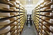 Ripening room at a cheese dairy