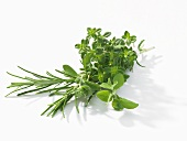 Small bunch of herbs
