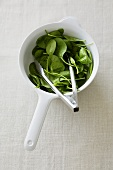 Baby spinach in a dish with tongs