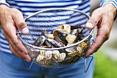 Two hands holding a metal sieve containing assorted shellfish