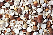 Euryale seeds (Qian Shi)