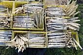 White asparagus in baskets