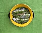 Gravad mackerel (Mackerel fillets marinated in dill, salt & sugar)