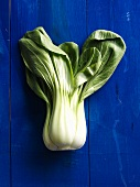 Pak choi on blue wooden background