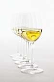 Several glasses of white wine in a row