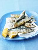Sardines baked on sea salt with lemon