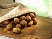 Potatoes in jute sack on wood