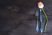A tulip beside knife and fork
