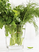 Dill and parsley in a glass of water