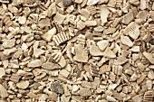 Ark shells, full-frame