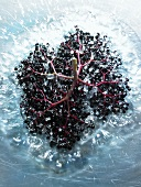 Cluster of elderberries in water