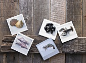 Fresh seafood arranged on photographic paper