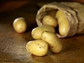 Kartoffeln (Sorte Amandine) mit Papiertüte