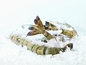King prawns, frozen