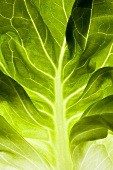 Lettuce leaf (backlit)
