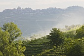 Vineyards in Langhe, Piedmont, Italy