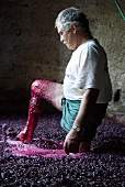 Man treading grapes in the traditional way