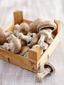 Crimini mushrooms in box