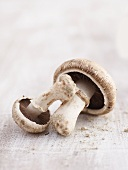 Two crimini mushrooms