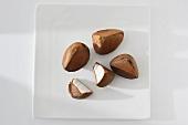 Früchte des Andiroba-Baumes (Carapa guianensis)