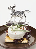 Goat's cheese & rosemary on cracker with goat Chevre label