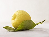 Lemon on leaf